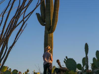 Standing with Saguaros