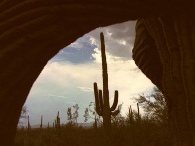 Saguaro Minute