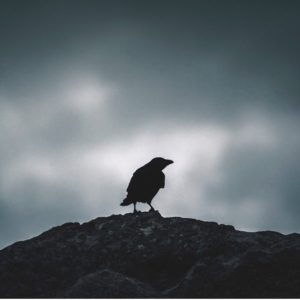 I am like a crow looking for the shortest route. I survived day one. I am green and damp. Even my bones have emotions. I hope I have not made a mistake.